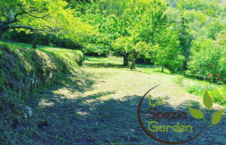 promozione teglio erba